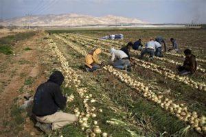 Farmers in the Jordan Valley