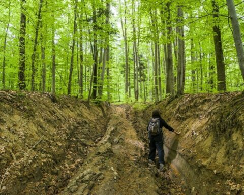 Alerta! International call to action! – Defend Turnicki national park [Poland]